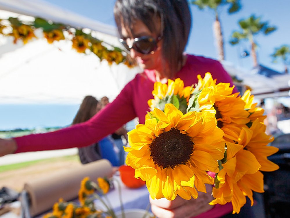 Sunflowers became the popular buy at the morning markets